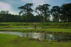 Elefant-und Mitfahrer-Überfahrt-Fluss in Nepal Lizenzfreie Stockfotos