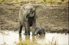 Elefant und neugeborenes Lizenzfreie Stockfotos