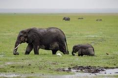 Elefant und sein Junges in der Savanne überfluten an Aboseli-Park in KE Stockfoto