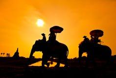 Elefant und Sonnenuntergang mit Sonnenuntergangszene Stockfotografie