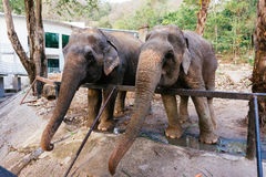Elefant von thailändischem Stockbild