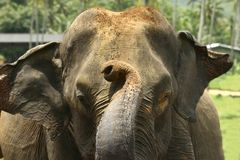 Elefant am Waisenhaus Lizenzfreie Stockfotografie