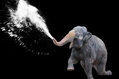 Elefant-Wasser-Spray im schwarzen Hintergrund Lizenzfreie Stockfotos