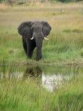Elefant am Wasserstrom stockfotografie