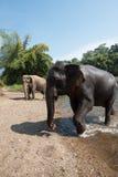 Elefant-Welt Norden-Thailand Stockfoto