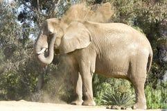 Elefant-werfender Schmutz Stockbild