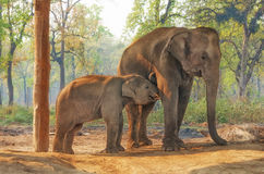 Elefant-züchtende Mitte in Chitwan, Nepal stockbilder