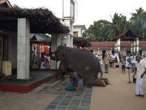 Elefantanbetung kataragama dewiyo lizenzfreies stockfoto