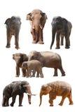 Elefantansammlung Stockfotografie