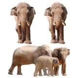 Elefantansammlung Stockbilder