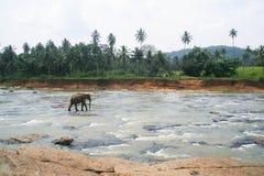Elefantanseende i mitt av floden med stenar Royaltyfria Bilder