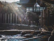 Elefantanseende på en glänsande solig dag royaltyfri foto