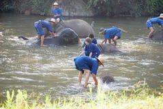 Elefantbaden lizenzfreie stockfotos