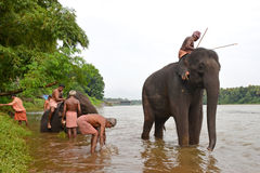 Elefantbadning i floden Royaltyfria Foton
