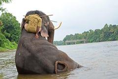 Elefantbadning i floden Royaltyfria Bilder