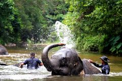 Elefantbadning i floden arkivbild