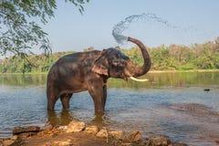Elefantbadning, Kerala, Indien Royaltyfri Fotografi