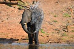 Elefantbadning på floden Arkivbild