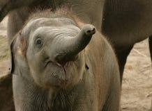 elefantbarn royaltyfria bilder