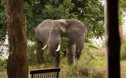 Elefantbesuch Stockbild