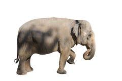 Elefantbilder auf verschiedenen Farben haben verschiedene Verben lizenzfreies stockbild