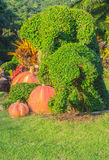 Elefantbonsaibaum im Garten Lizenzfreies Stockbild