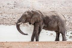 Elefantbruksstam som ska kylas ner med vatten Arkivbild