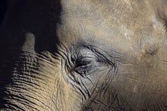 Elefantcloseupstående av ögat och framsidan Arkivfoton