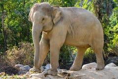 Elefantcmap Royaltyfri Bild