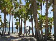 Elefantdusche Stockbild