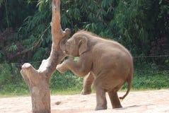 Elefante Imagem de Stock Royalty Free