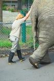 Elefante imagem de stock