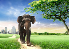 Elefante Foto de archivo