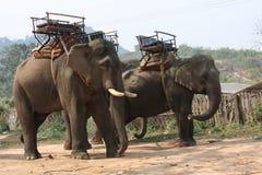 Elefante Arkivfoton