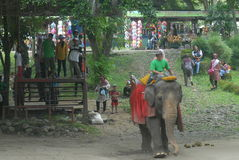 Elefante Immagini Stock