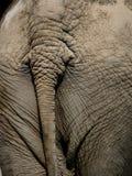 Elefante #4 Immagine Stock