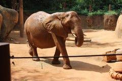 Elefante Foto de archivo libre de regalías