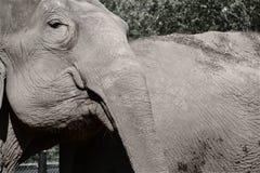 Elefante Imágenes de archivo libres de regalías