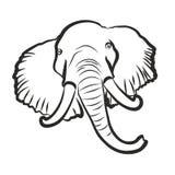 Elefante Foto de Stock