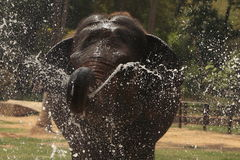 Elefante Fotos de Stock Royalty Free