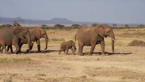 Elefante almacen de metraje de vídeo