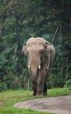 Elefante Fotografía de archivo