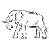 Elefante stock de ilustración