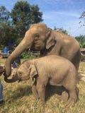 Elefante Imagens de Stock Royalty Free
