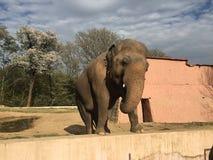 Elefante Imagen de archivo libre de regalías