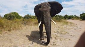 Elefante Immagini Stock Libere da Diritti