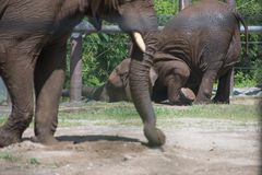 Elefante immagine stock