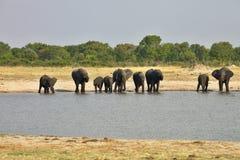 Elefante, africana del Loxodonta, en el parque nacional de Hwange, Zimbabwe fotografía de archivo