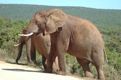 Elefante africano fotografia stock libera da diritti