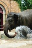 Elefante africano Immagine Stock Libera da Diritti